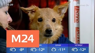 Из квартиры на Волжском бульваре вызволили десяток истощенных собак - Москва 24