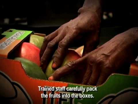 """ORGANIC MANGOES: """"Packing"""" at ITFC in GHANA"""