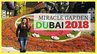 Dubai Miracle Garden   Tourist Spot In Dubai