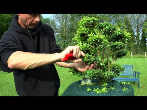 Lavendula schneiden im august doovi for Buchsbaum garten gestalten