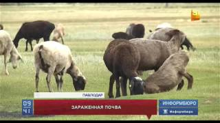 В очаге сибирской язвы в Павлодарской области  введен режим ЧС