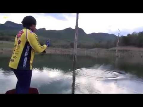 ตกปลาชะโดยัก กบลุงใหญ่ สับสั่งตาย