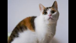 FUNNY PETS COMPLATİONS -The Most Cute and Funny Cat Videos
