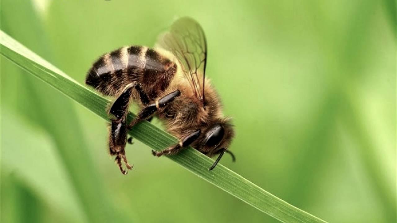время стыковки фото уставшей пчелки нам