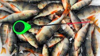 Решил половить окуня в ГЛУХОЗИМЬЕ и ПРОВАЛИЛСЯ в НЕПОНЯТНУЮ КАНАВУ Зимняя рыбалка на мормышку 2021