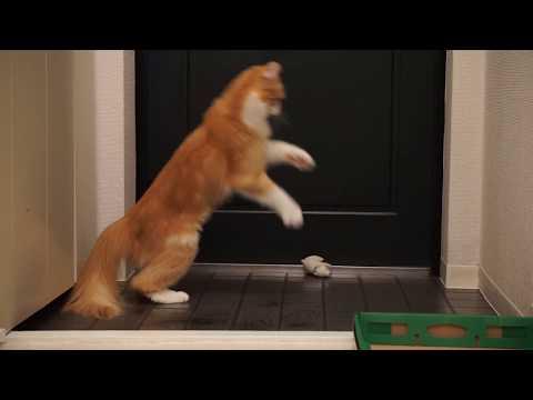 ぬいぐるみと遊ぶ猫