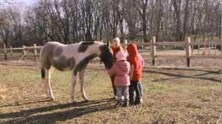 Все О Домашних Животных: Лошадиный Рай, Экоконюшня