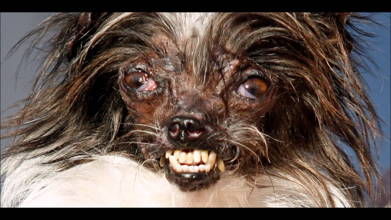Ugly Face Dog Breed