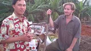 Growing Bananas, Okra, chayote, pumpkins and more in Tropical Hawaii Homestead