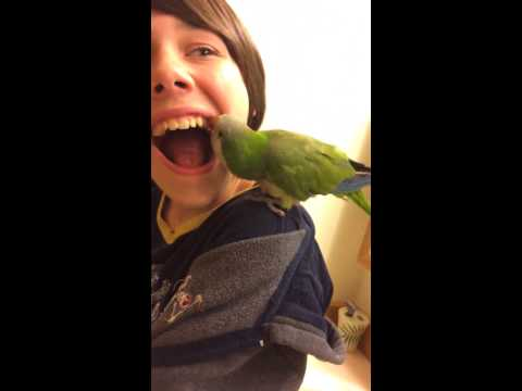 Parrot Pulls Kid's Loose Tooth, Gives Dentists And Bird Owners Everywhere A Panic Attack