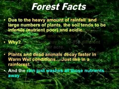 Rainforest Characteristics - YouTube