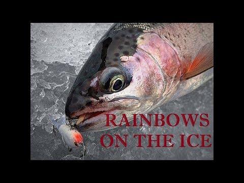 *SLAYING SOME RAINBOWS* Ice Fishing On Georgetown Lake, Colorado #5280adventures