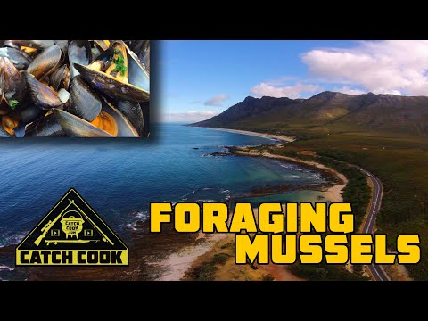 Breathtaking location for coastal forage | delicious mussel recipe | catch cook