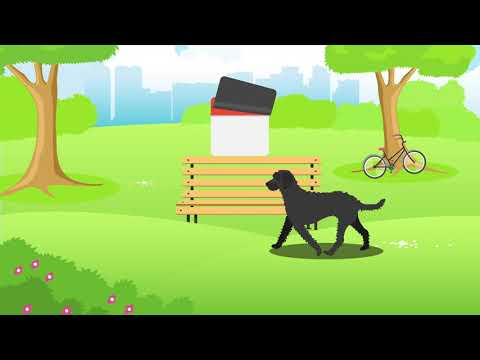 Doggle Guides - Labradoodle - Dog Breed Info