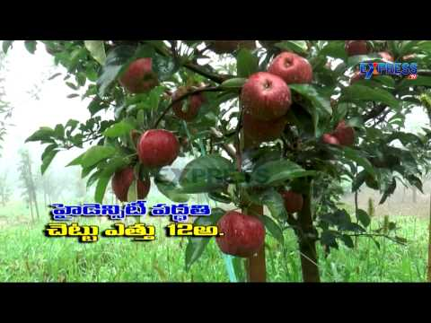Successful Organic Apple Farming by Telugu Farmer in Himachal Pradesh - Express TV