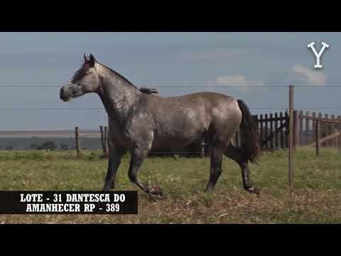 LOTE   31 DANTESCA DO AMANHECER RP   389