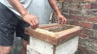 Chia sẻ kinh nghiệm nuôi ong? Cách trị bệnh thối ấu trùng tuổi nhỏ trên đàn ong nội