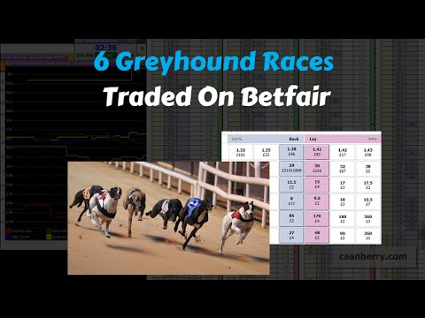 Trading the Greyhounds on Betfair Exchange, 6 races!!