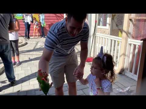 Daddy And Scarlett Feed The Birds
