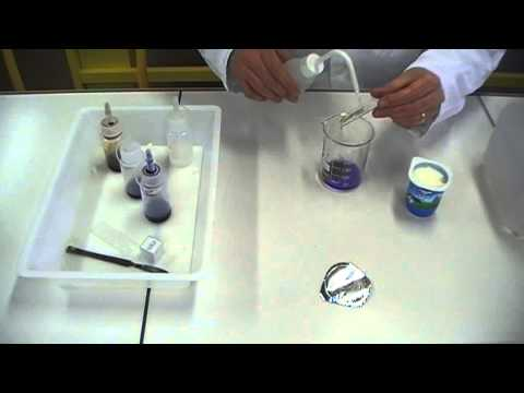 coloration gram des bactries du yaourt gram staining - Coloration De Gram Protocole