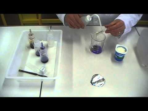 coloration gram des bactries du yaourt gram staining - Coloration Gram