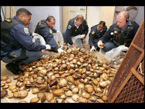 China's appetite for abalone spurs organized crime in South Africa