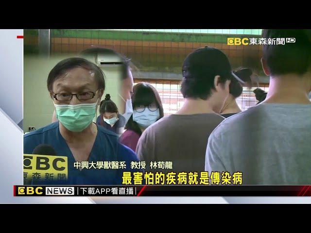 夏季「鉤端螺旋體」盛行 獸醫學生替600隻流浪狗打疫苗