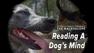 Reading A Dog's Mind