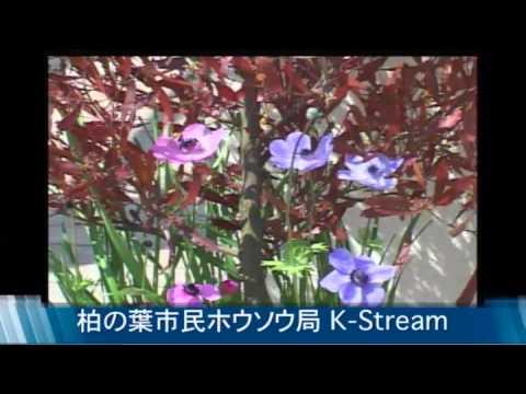 柏の葉K-st.2012.4.24放送 「笑 って笑って子育てスマイル〜とまそん玉手箱〜