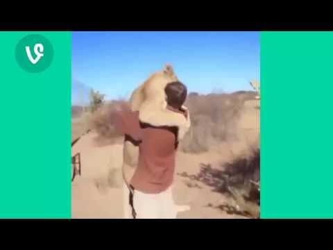 Best Funny Animal Vine Compilation of the Week June 2015 Cats Dogs and More!