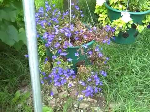 shaylee's-purple-wedding-centerpiece-baskets