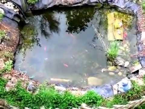 Goldfische im teich beim laichen teil 3 doovi for Goldfische im winter im teich