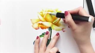 Как нарисовать розу маркерами. Видео урок рисования цветов. Speed drawing.