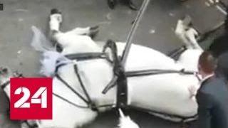 В Италии загнали свадебную лошадь