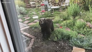 Bear climbs out of dumpster, attacks man in Aspen, Colorado
