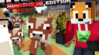 Minecraft | CHASING COWS | Foxy's Bedrock Survival [13]