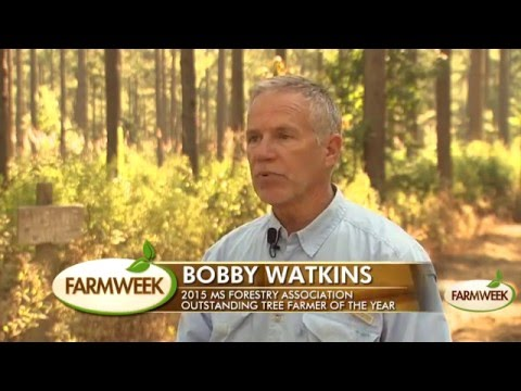 MS tree farmer says herbicides can restore southern forests