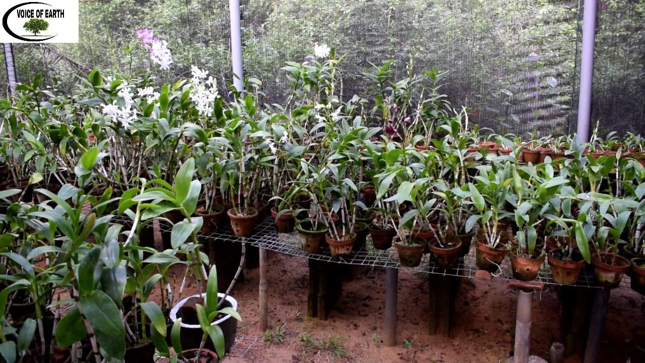 Orchid Plantation Sri Lanka Youtube
