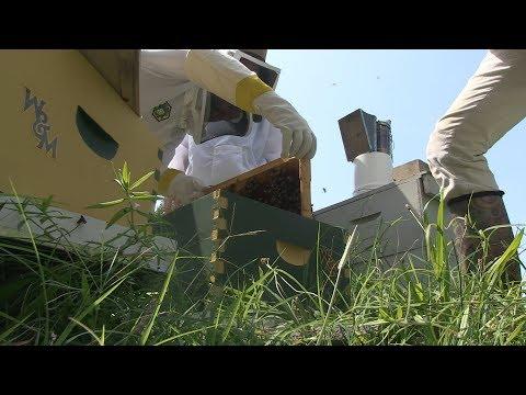 W&M honey: From KelRae Farm to campus tables