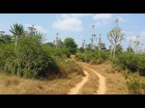 Kissama National Park - Angola
