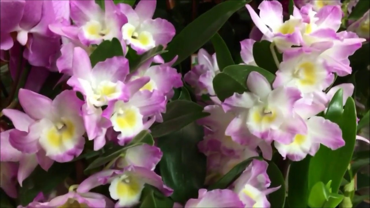 Beautiful exotic orchidscolorful tulips and flower bouquets beautiful exotic orchidscolorful tulips and flower bouquets izmirmasajfo