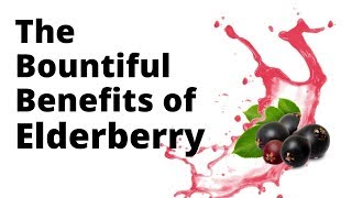 The Bountiful Benefits of Elderberry to help you fight the cold and flu