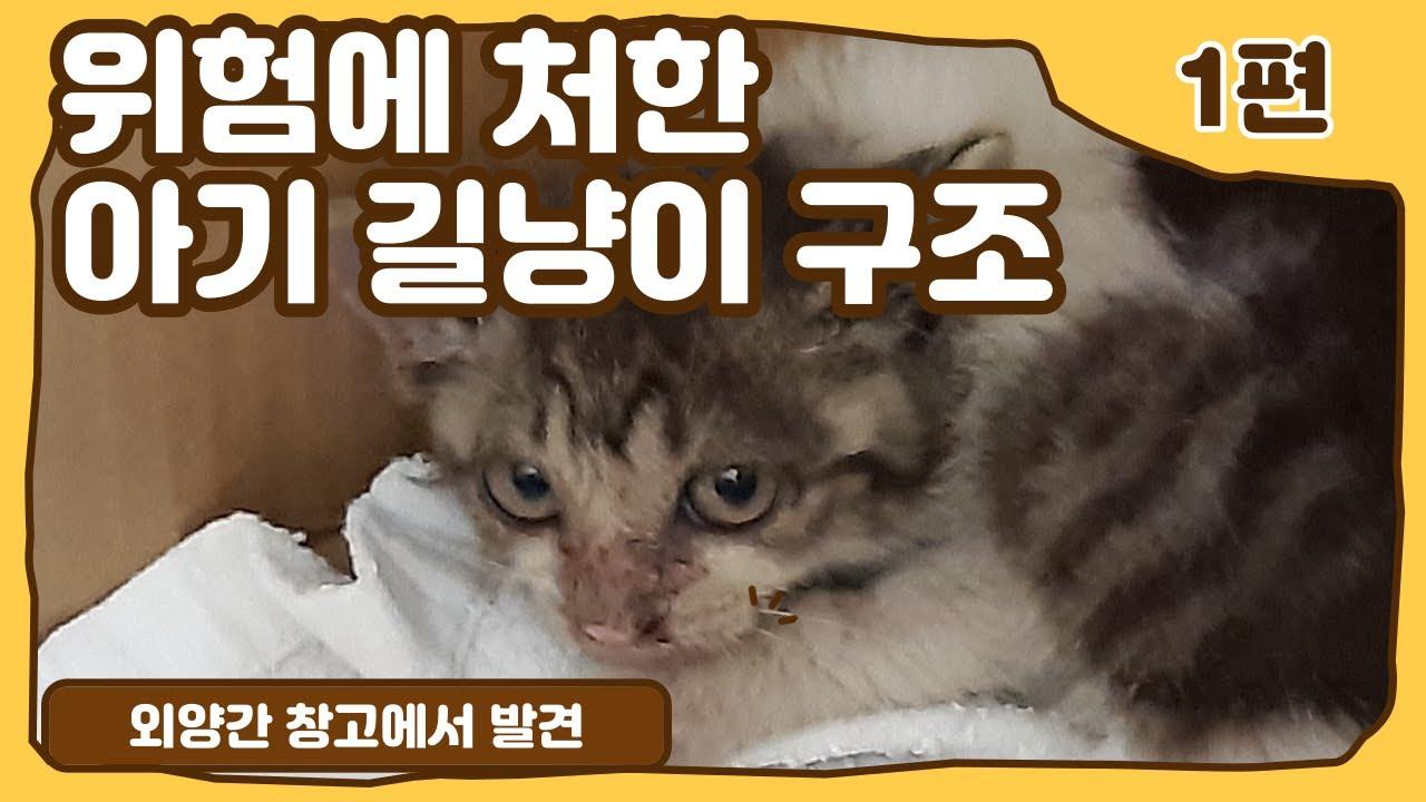 1편) 위험에 처한 길고양이 구조 엄마는 어디갔니?