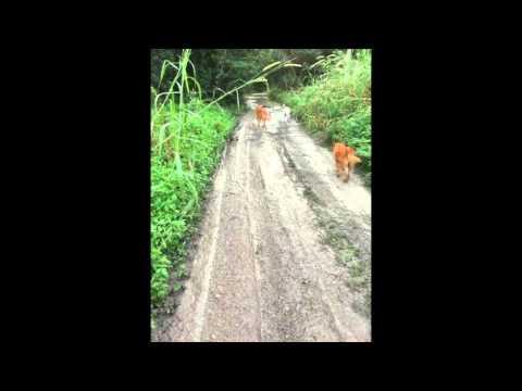 Save Our Miami Dog Park Matheson Hammock Park