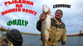 Рыбалка на Нижней Волге  Спиннинг  Фидер