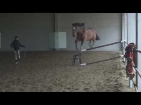 Adrianus T jump 1,50m