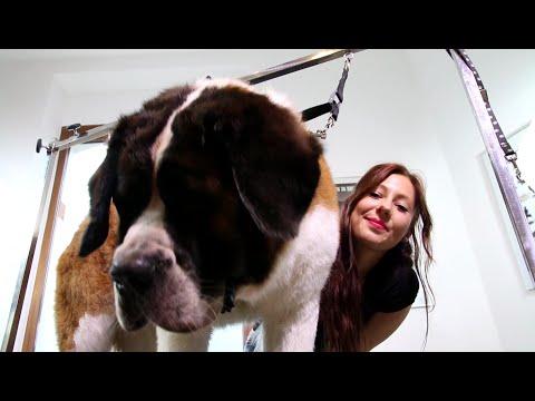 Große Hunde Baden - Lenis Tipps