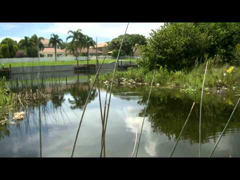 Yb normal fishing for peacock bass in delray beach florida for Delray beach fishing