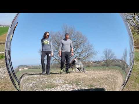Dog tricks - quartet with border collies Bolt & Rysa