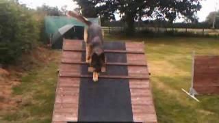 Dogfatherresidential Training_0001.wmv